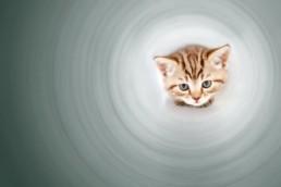 société émergente ou submergente et les funny cats