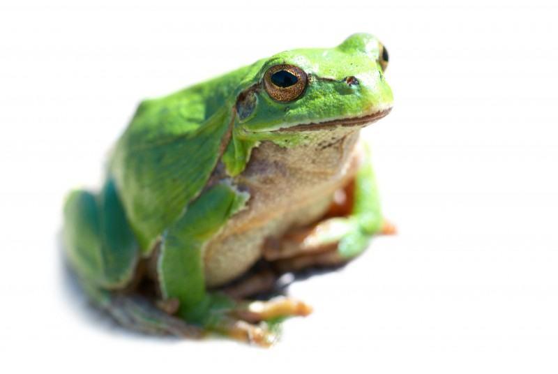 V Frog Kpm I'm a frog,...