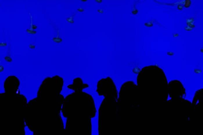 L'algue bleue de votre organisation